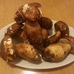 Funghi Porcini in Padella1