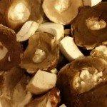 Funghi Porcini in Padella12
