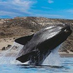el-avistamiento-de-ballenas-en-uruguay